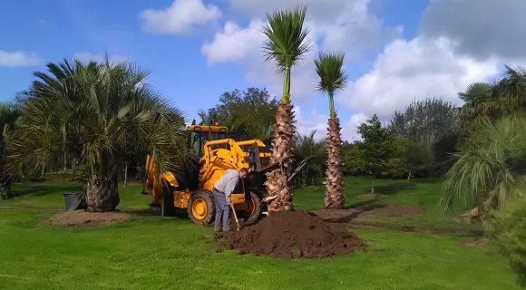 Plantation arbre et arbuste